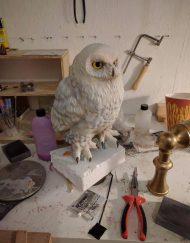 Hedwig Lookalike